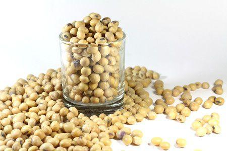 sójové boby